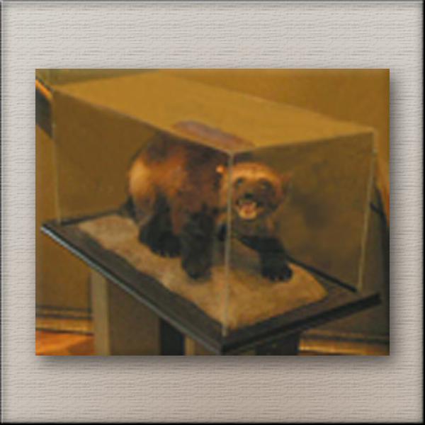 Framed Animal